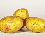 King Edward potato