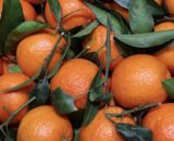 LEAFY CLEMENTINES