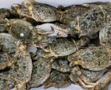 fresh blue swimmer crabs
